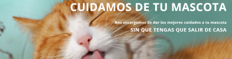 Gato 1.png
